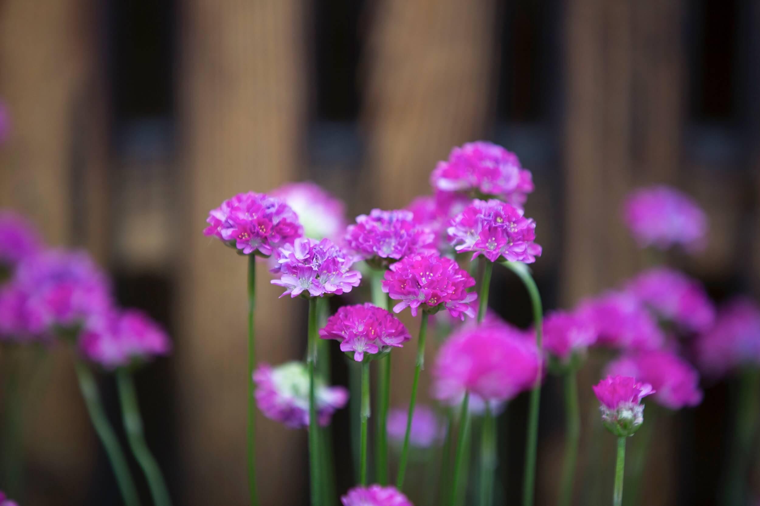 Blueten Violett Zart 1