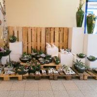Blumen Und Pflanzen Im Edeka