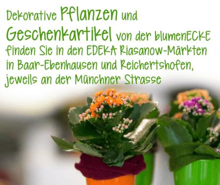 Blumenecke Pflanzen im EDEKA kaufen