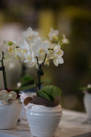 Orchidee Dekoriert