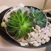 Pflanzen In Schale Dekoriert Fuer Ostern